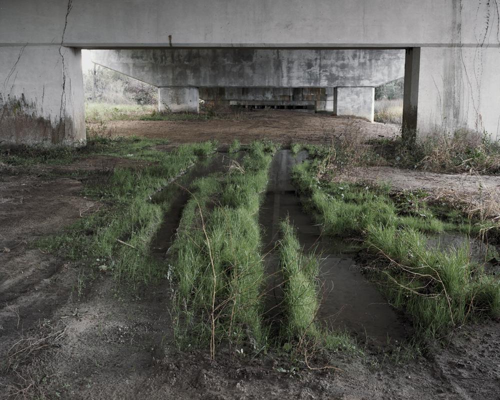 grasstracks